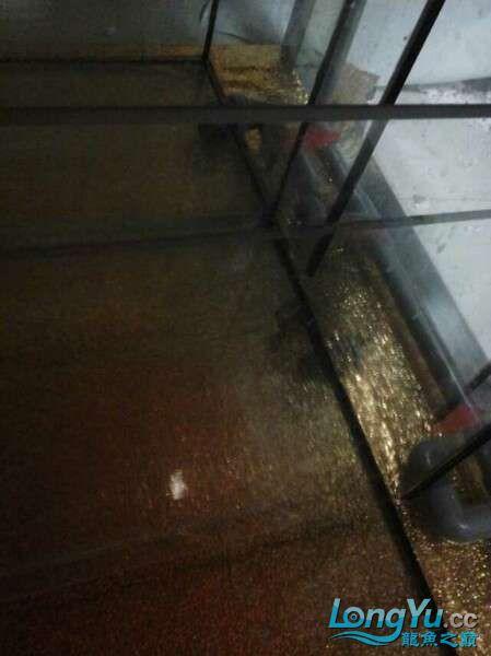 申精 鱼缸历时50天终于完全体小鱼已经入缸外加牛心汉堡制作超多图杀死猫 南充龙鱼论坛 南充水族批发市场第178张