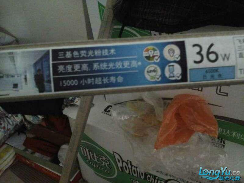 申精 鱼缸历时50天终于完全体小鱼已经入缸外加牛心汉堡制作超多图杀死猫 南充龙鱼论坛 南充水族批发市场第182张