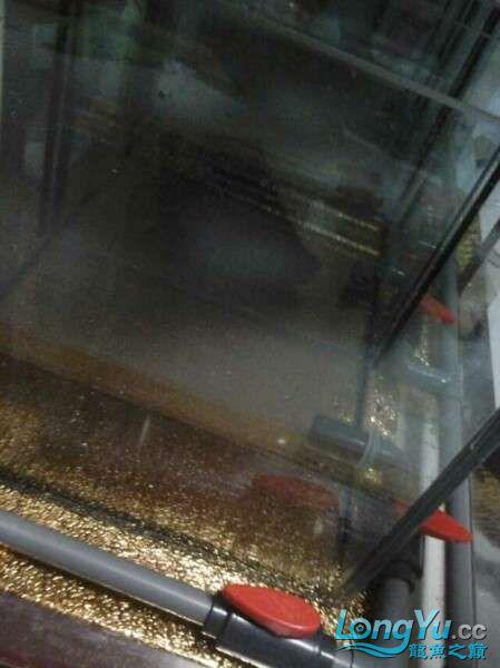 申精 鱼缸历时50天终于完全体小鱼已经入缸外加牛心汉堡制作超多图杀死猫 南充龙鱼论坛 南充水族批发市场第184张