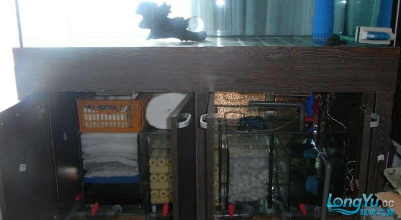 申精 鱼缸历时50天终于完全体小鱼已经入缸外加牛心汉堡制作超多图杀死猫 南充龙鱼论坛 南充水族批发市场第190张