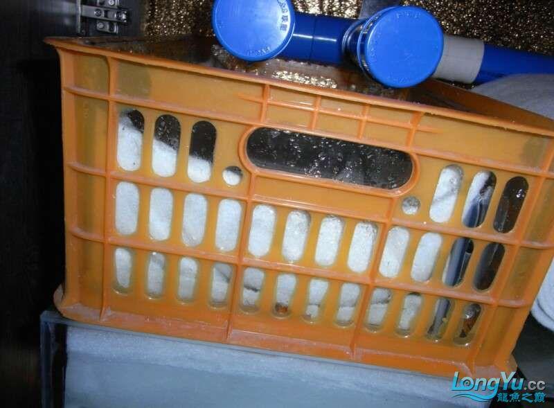 申精 鱼缸历时50天终于完全体小鱼已经入缸外加牛心汉堡制作超多图杀死猫 南充龙鱼论坛 南充水族批发市场第193张