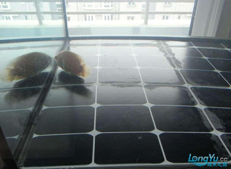 申精 鱼缸历时50天终于完全体小鱼已经入缸外加牛心汉堡制作超多图杀死猫 南充龙鱼论坛 南充水族批发市场第200张