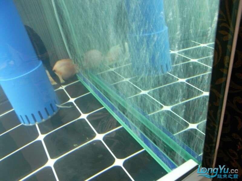 申精 鱼缸历时50天终于完全体小鱼已经入缸外加牛心汉堡制作超多图杀死猫 南充龙鱼论坛 南充水族批发市场第202张