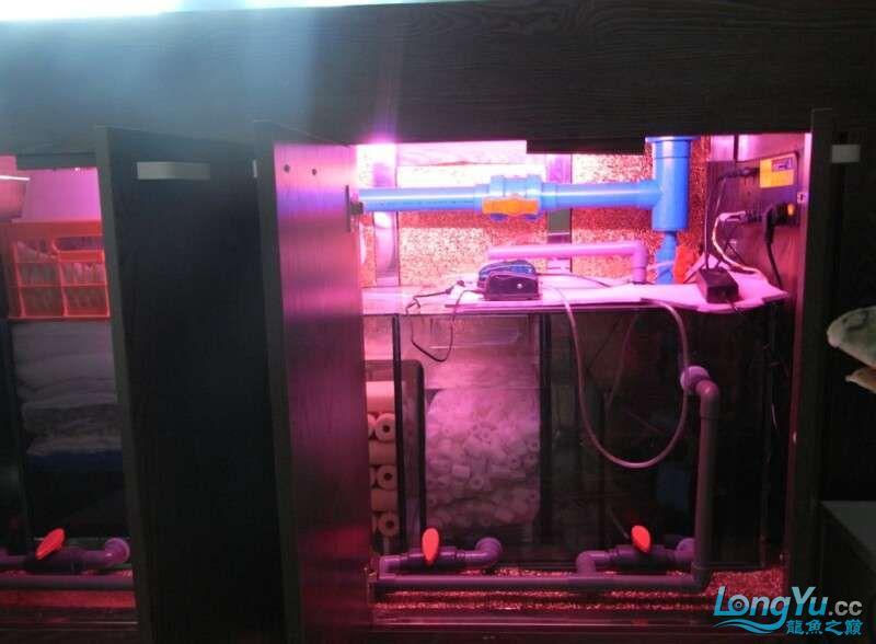 申精 鱼缸历时50天终于完全体小鱼已经入缸外加牛心汉堡制作超多图杀死猫 南充龙鱼论坛 南充水族批发市场第204张