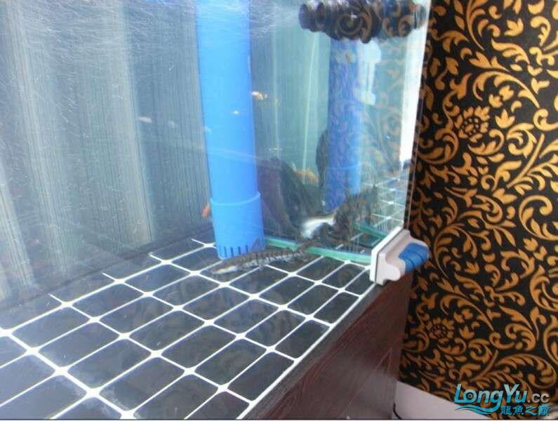 申精 鱼缸历时50天终于完全体小鱼已经入缸外加牛心汉堡制作超多图杀死猫 南充龙鱼论坛 南充水族批发市场第206张