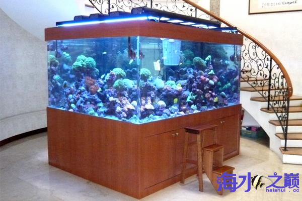 海水之巅优秀帖子推荐周记第一番 天津龙鱼论坛 天津龙鱼第4张
