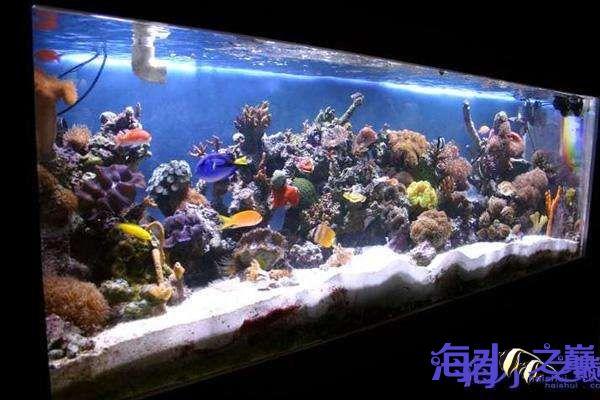 海水之巅优秀帖子推荐周记第一番 天津龙鱼论坛 天津龙鱼第5张