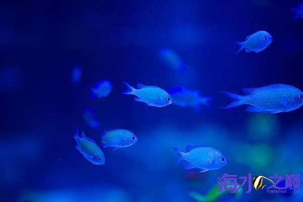 海水之巅优秀帖子推荐周记第一番 天津龙鱼论坛 天津龙鱼第11张