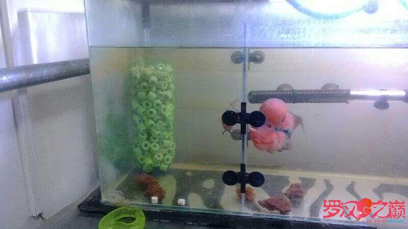 用雪碧瓶做的细菌屋 乌鲁木齐龙鱼论坛 乌鲁木齐龙鱼第2张