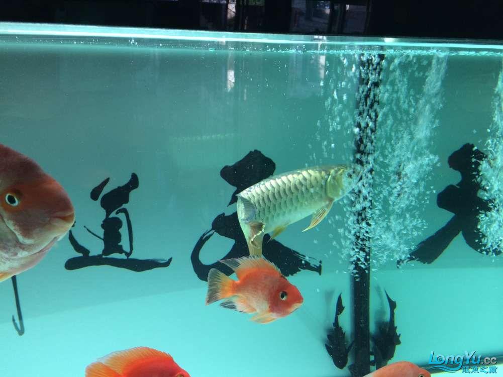 成都热带鱼早早起来拍拍你 成都水族批发市场 成都龙鱼第7张