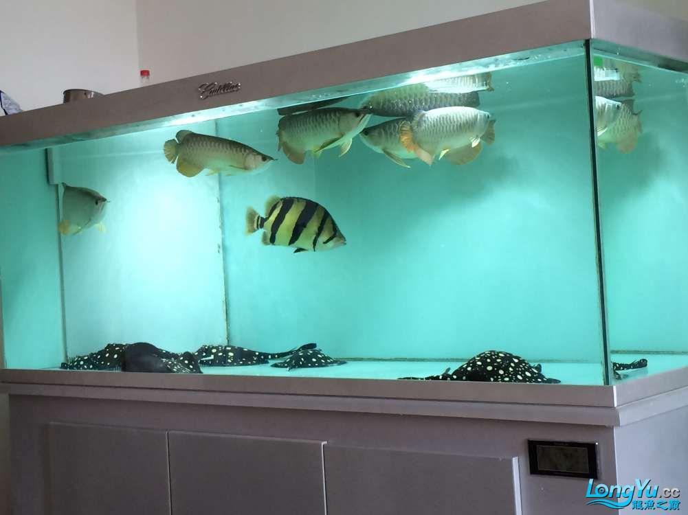 天气炎热心烦气躁看看爱鱼平静很多 银川水族批发市场 银川龙鱼第1张