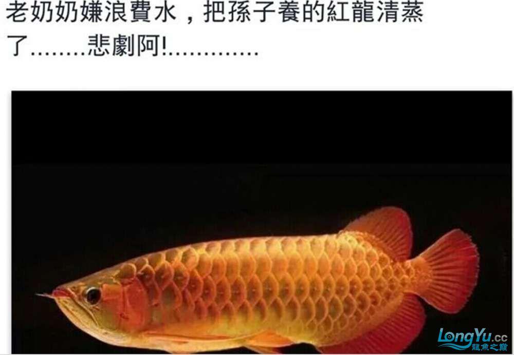 南昌飞凤鱼怎么看纹听说有位奶奶把孙子的红龙清蒸了 南昌水族批发市场 南昌龙鱼第1张