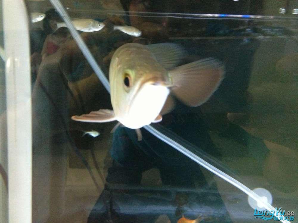 鱼啊鱼什么时候才发色啊 绵阳水族批发市场 绵阳水族批发市场第4张