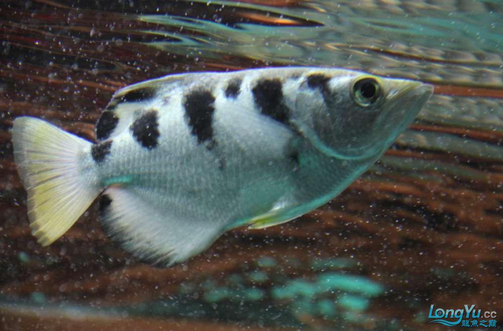 我的鱼缸我的爱超级混养我喜爱 沈阳水族批发市场 沈阳龙鱼第8张