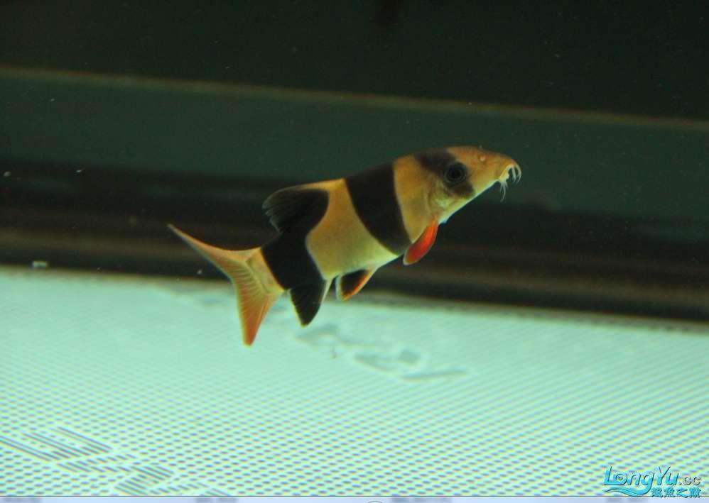 我的鱼缸我的爱超级混养我喜爱 沈阳水族批发市场 沈阳龙鱼第9张