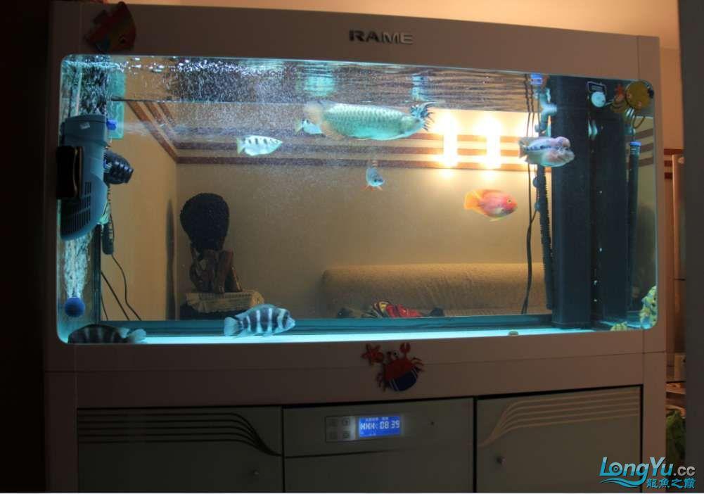 我的鱼缸我的爱超级混养我喜爱 沈阳水族批发市场 沈阳龙鱼第11张