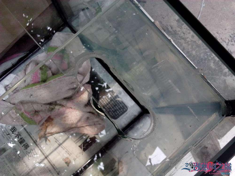 上滤鱼缸制作超全教程看完自己开缸店 北京龙鱼论坛 北京龙鱼第37张