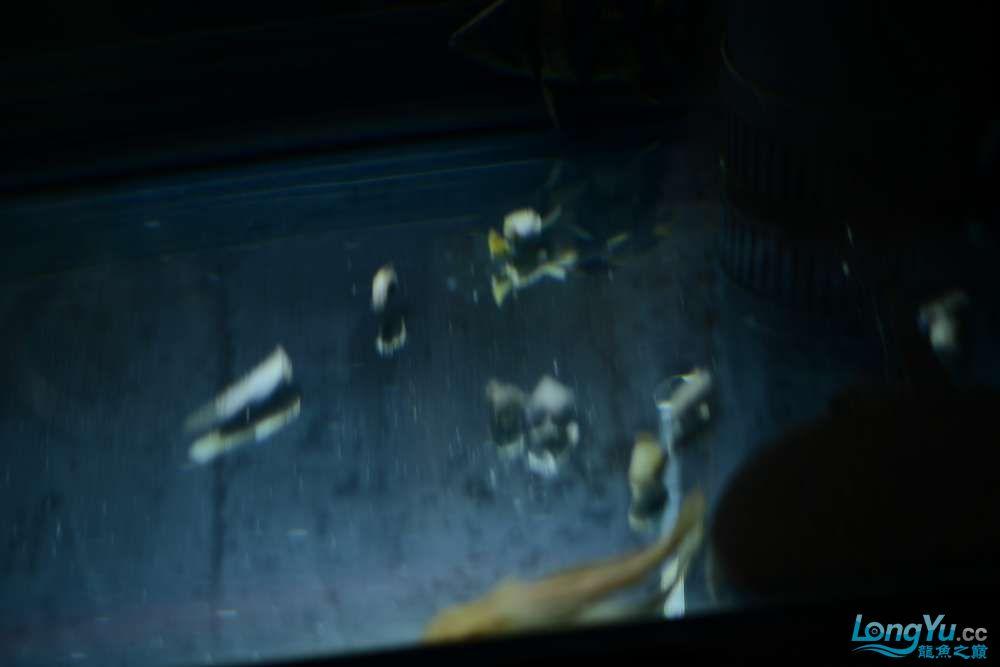 龙拒食十几天今天把吃的都吐了 南京龙鱼论坛 南京龙鱼第15张
