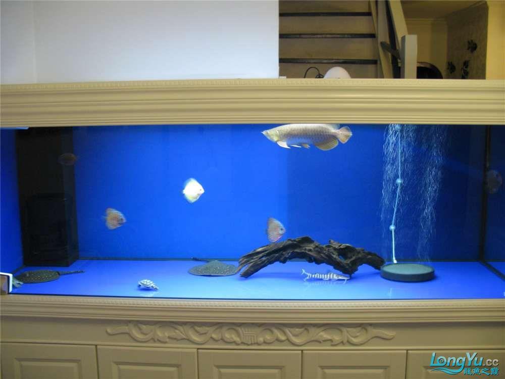 地中海的家配地中海的缸 吉林龙鱼论坛 吉林龙鱼第2张