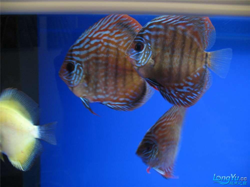 地中海的家配地中海的缸 吉林龙鱼论坛 吉林龙鱼第18张