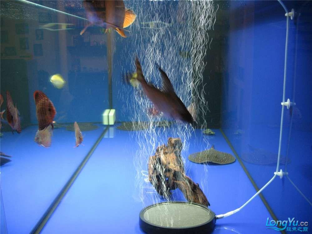 地中海的家配地中海的缸 吉林龙鱼论坛 吉林龙鱼第5张