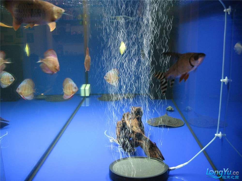 地中海的家配地中海的缸 吉林龙鱼论坛 吉林龙鱼第6张