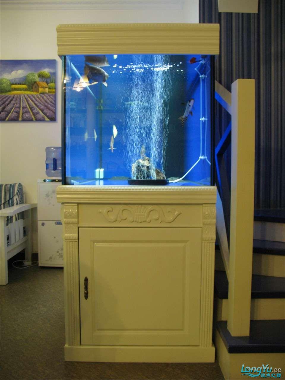 地中海的家配地中海的缸 吉林龙鱼论坛 吉林龙鱼第4张