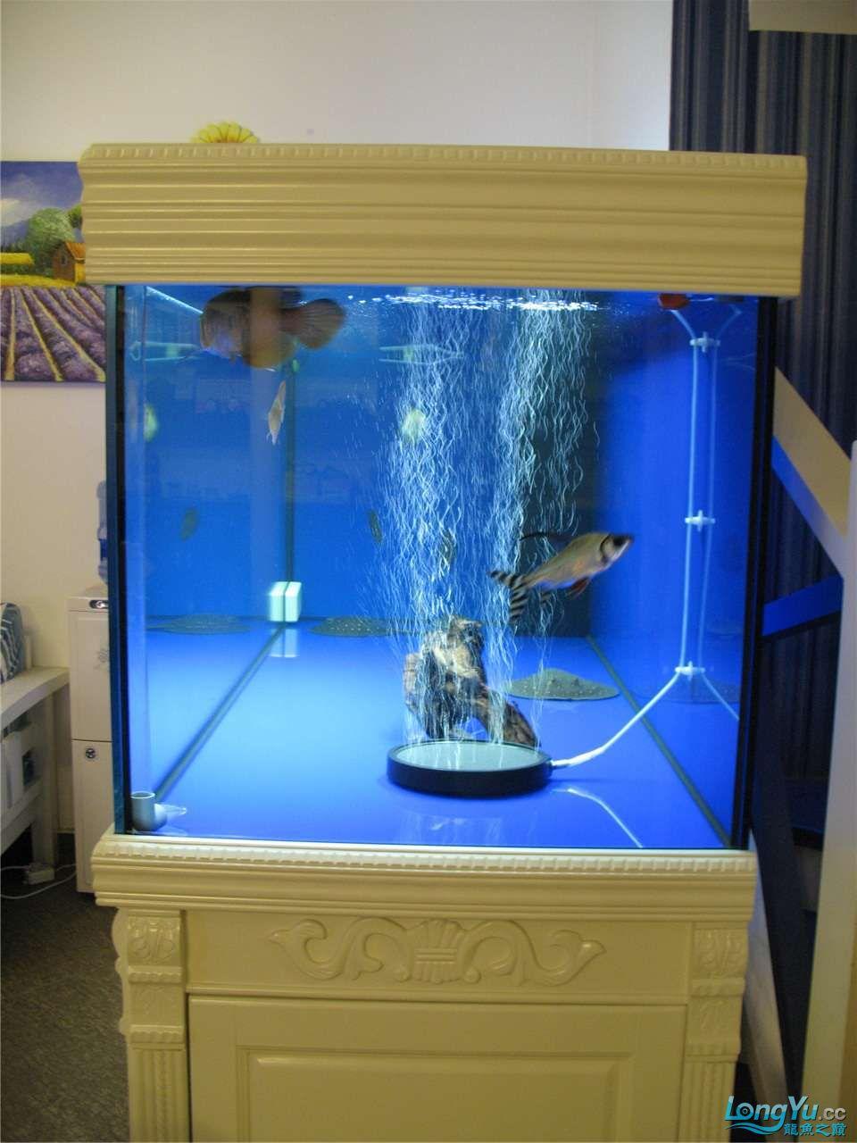 地中海的家配地中海的缸 吉林龙鱼论坛 吉林龙鱼第3张