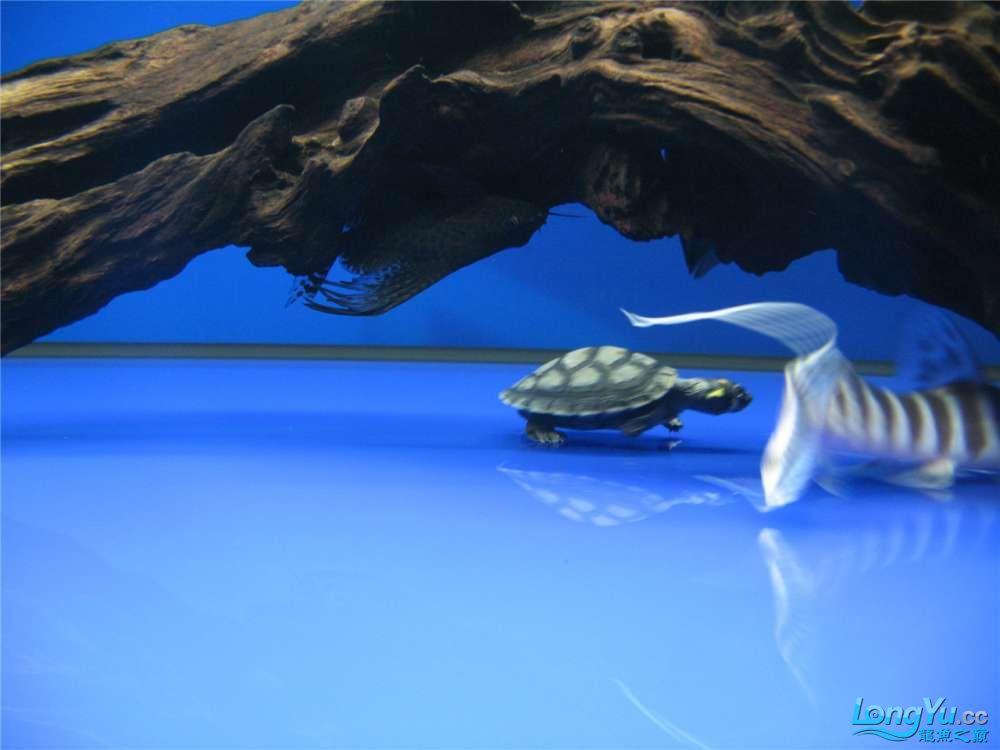 地中海的家配地中海的缸 吉林龙鱼论坛 吉林龙鱼第14张