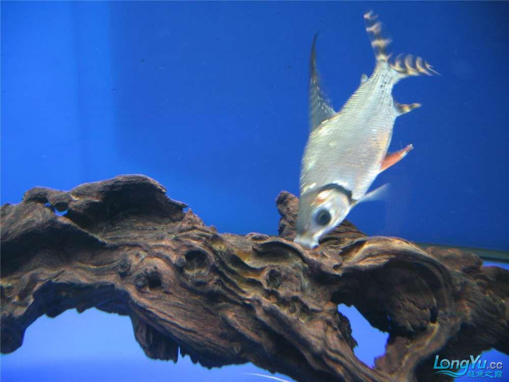 地中海的家配地中海的缸 吉林龙鱼论坛 吉林龙鱼第11张