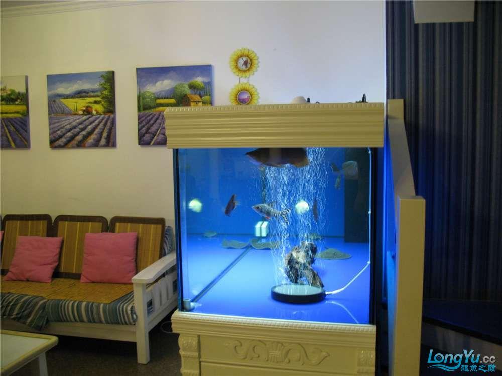 地中海的家配地中海的缸 吉林龙鱼论坛 吉林龙鱼第53张