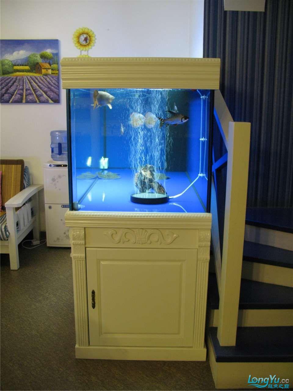 地中海的家配地中海的缸 吉林龙鱼论坛 吉林龙鱼第50张