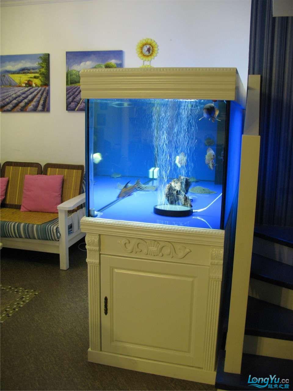 地中海的家配地中海的缸 吉林龙鱼论坛 吉林龙鱼第49张