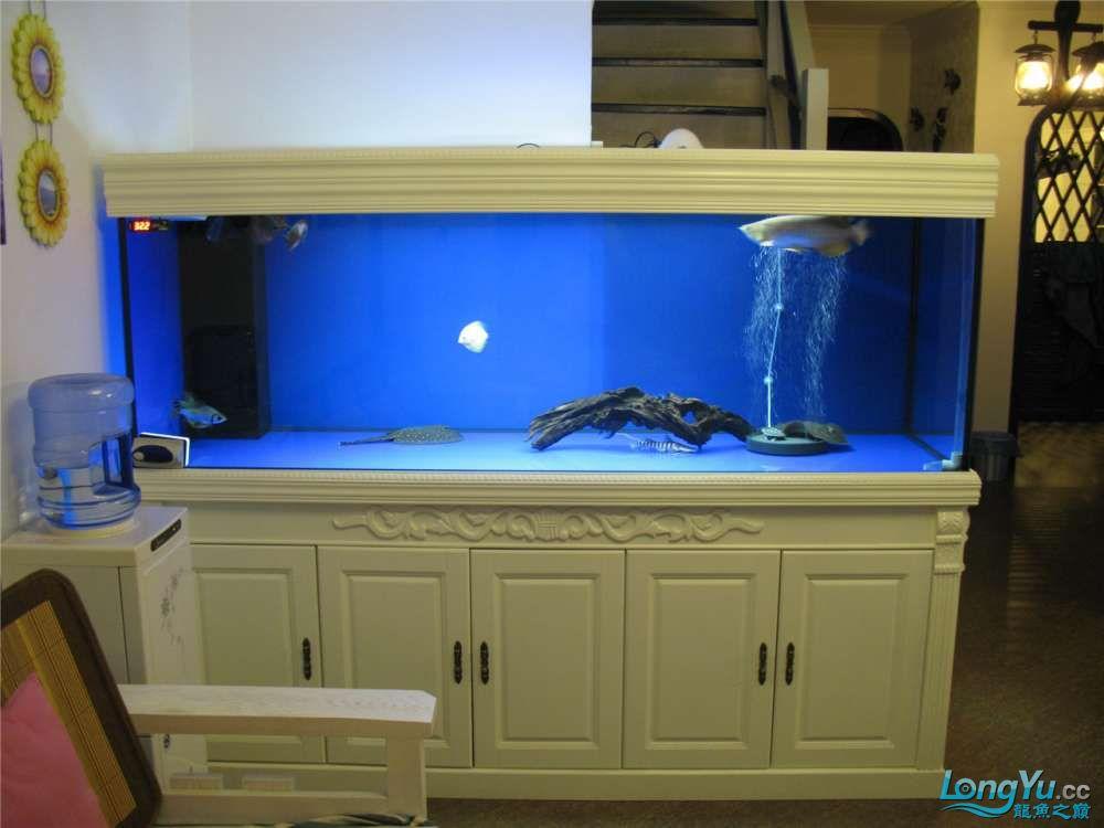 地中海的家配地中海的缸 吉林龙鱼论坛 吉林龙鱼第47张