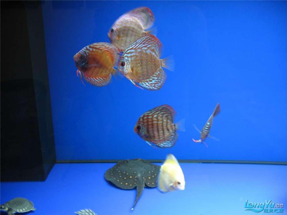 地中海的家配地中海的缸 吉林龙鱼论坛 吉林龙鱼第7张
