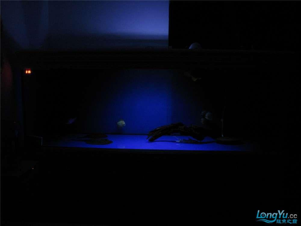 地中海的家配地中海的缸 吉林龙鱼论坛 吉林龙鱼第38张