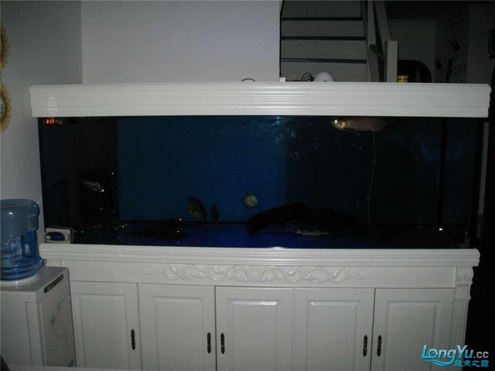地中海的家配地中海的缸 吉林龙鱼论坛 吉林龙鱼第52张