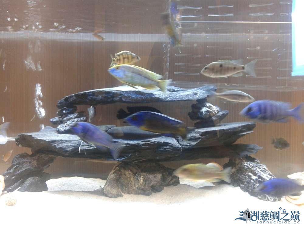 三个月的跳湖直接上图各位湖友望提出意见 郑州水族批发市场 郑州龙鱼第15张