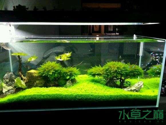 西安小草缸一枚欢迎参观 长沙龙鱼论坛 长沙龙鱼第3张