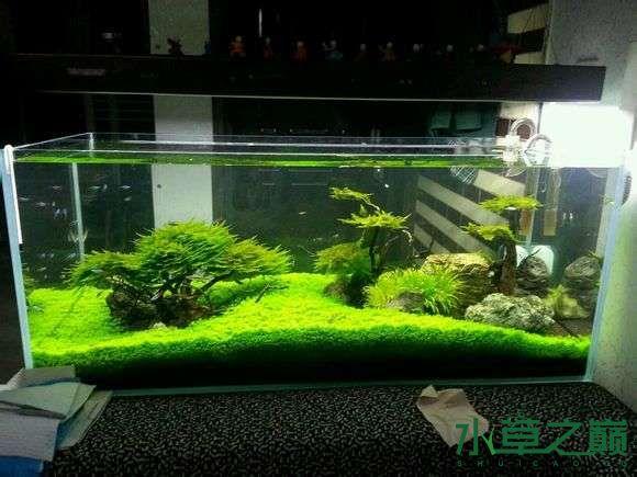 西安小草缸一枚欢迎参观 长沙龙鱼论坛 长沙龙鱼第1张
