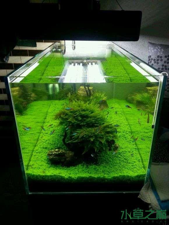 西安小草缸一枚欢迎参观 长沙龙鱼论坛 长沙龙鱼第2张