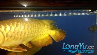 【西安鱼缸市场】尝试混养 西安龙鱼论坛 西安博特第2张