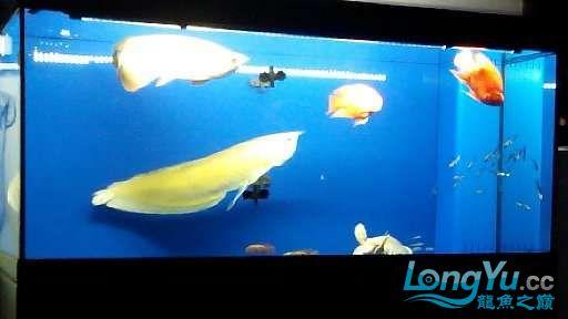 【西安鱼缸市场】尝试混养 西安龙鱼论坛 西安博特第5张