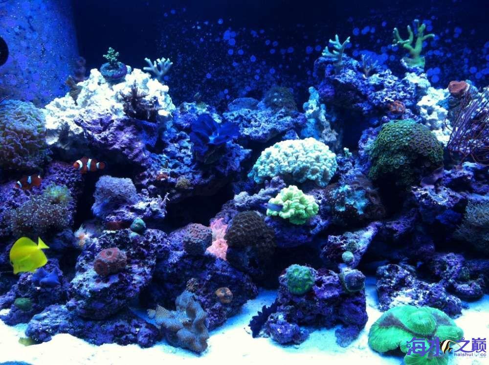 怎么就能把海水养的洋气一些呢? 昆明龙鱼论坛 昆明龙鱼第1张