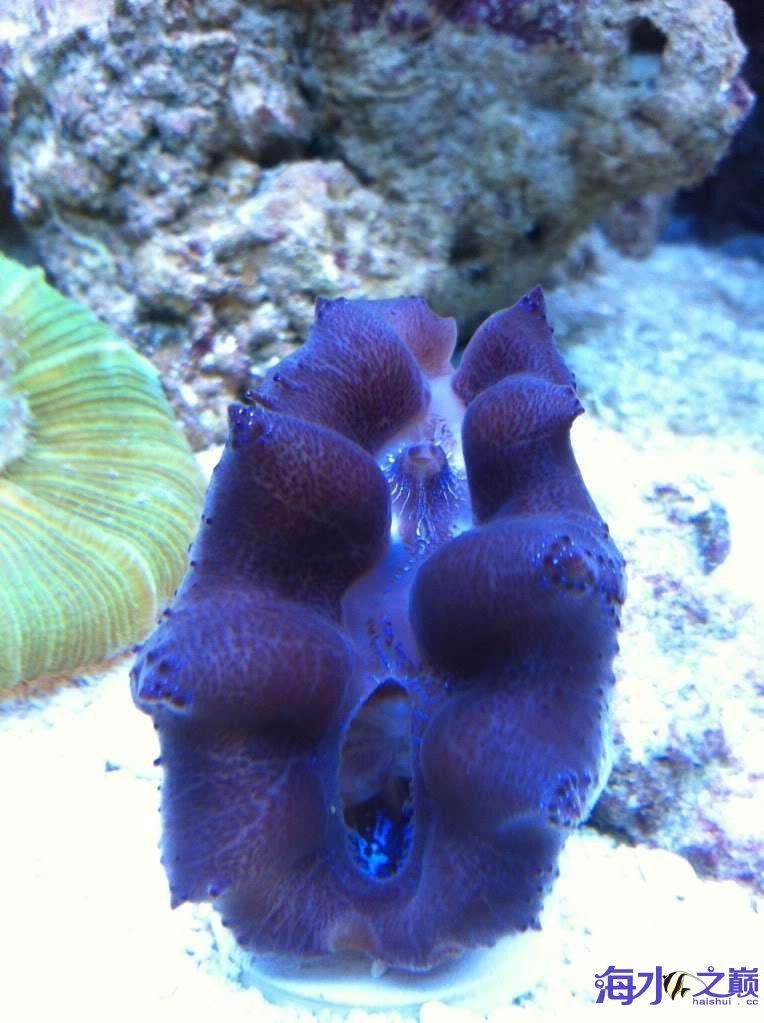 怎么就能把海水养的洋气一些呢? 昆明龙鱼论坛 昆明龙鱼第4张