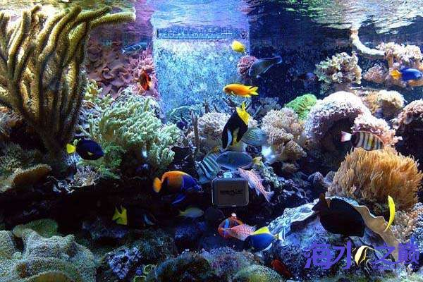 Spectacular-Fish-Tank-Seems-To-Conatin-Every-Possible-Color-And-Shade.jpg