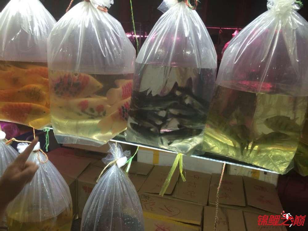 昨天晚上去了趟十里河鱼市真是开眼界啊 北京观赏鱼 北京龙鱼第5张