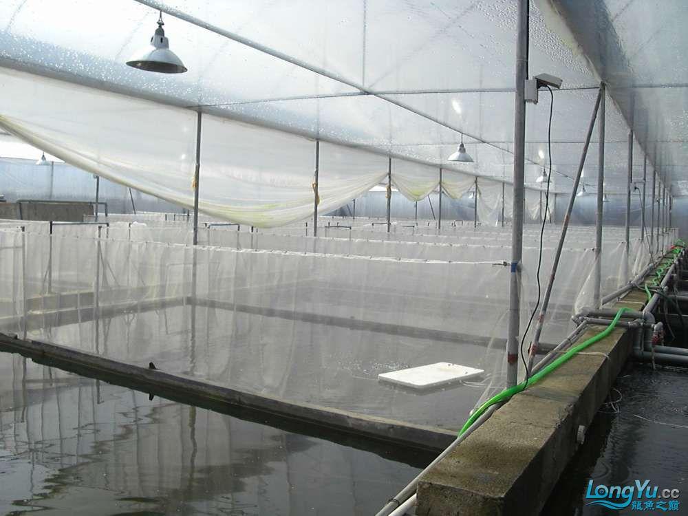 广州渔场4.JPG