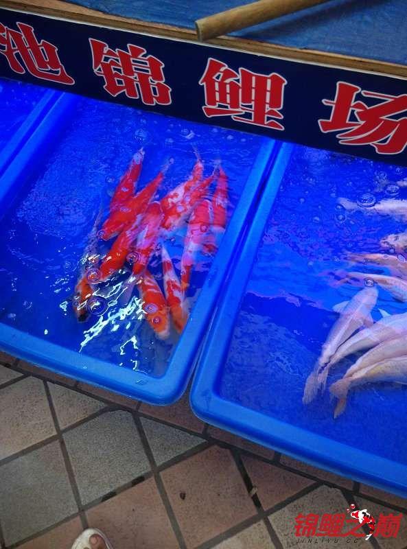 事实证明果然不能养在一起 沈阳水族批发市场 沈阳龙鱼第14张