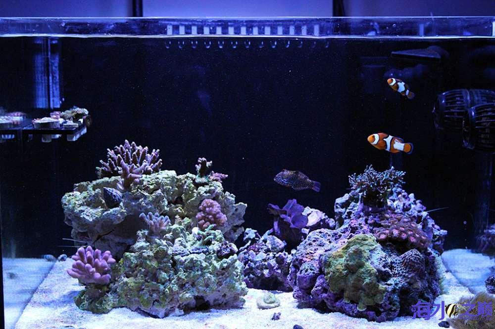 珊瑚长大有点乱 杭州龙鱼论坛 杭州龙鱼第1张